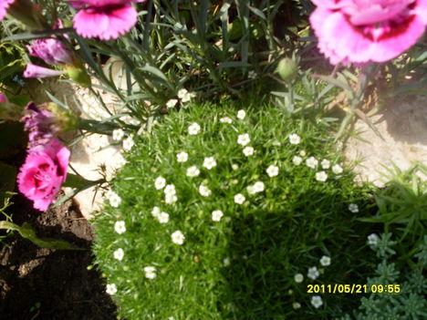 Májusi virágok 022