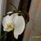 Májusi virágok 024