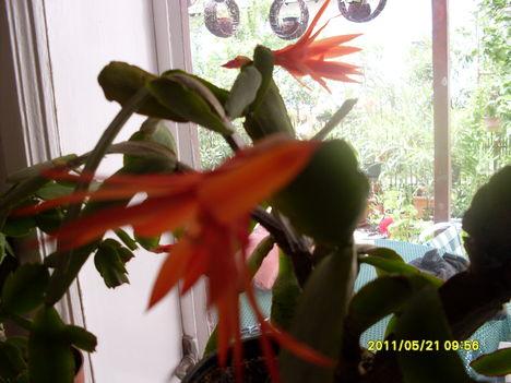 Májusi virágok 025