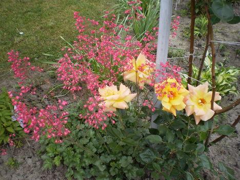 japán gyöngyvirág rózsával