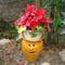 ciklámen,február óta virágzik,már kint