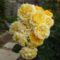 ez egy szál rózsa és imádom