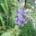 kertem növényei és virágai 2011