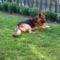 Roni kutyánk. 7