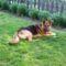 Roni kutyánk. 8