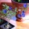 virág 016 Kék tikszem