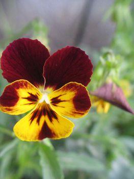 virág 034 Mini Árvácska