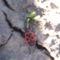 virág 038 Bodobács