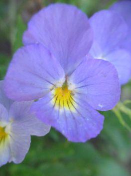 virág 039 Mini árvácska