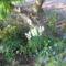 virág 012