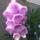Gyuszuvirag-001_1088028_5702_t