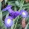 virág 026