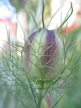 virág 029