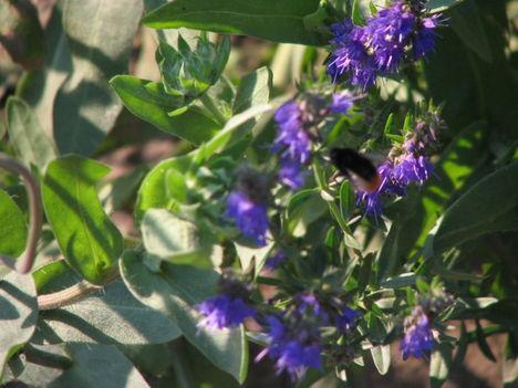 virág 043