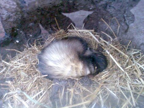 """""""Alszik mint a Mormota"""" :)"""