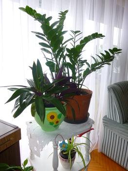 2011 virágok 004