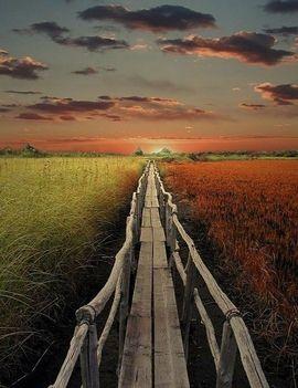Híd a mocsáron át