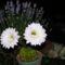 Egy napos élet a kaktuszomon 037