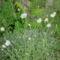 virág 023 Papírvirág