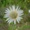 virág 024 Papírvirág