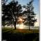 Fák  között  fénysugár