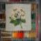variációk hortenziára - tavasz