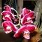 orchidea 11