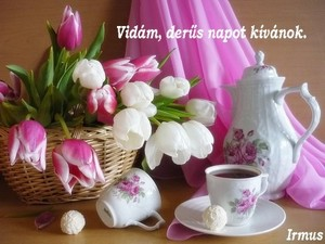 http://pctrs.network.hu/picture/1/9/_/tulipan_1090930_5575.jpg
