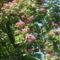 Virágz díszfák