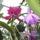 Másolat - Picasa orchidea 2010.02