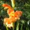 Kedvenc szinü virágom