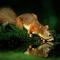A mókus is szomjas (Máté Bence képe)