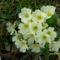 Erdei virág
