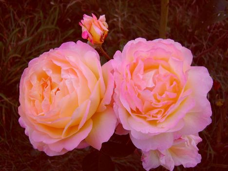 rózsaszínben