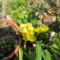 télálló kaktusz