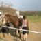 Encsi lovagol (51)