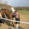 Encsi lovagol (52)