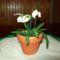 Gyöngyből virág 008