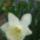 Tavaszi virágok 2009 04 07