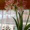 2009.áprilisi virágzás....