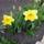 Csendélet Tavasz