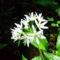 Virág az erdöben