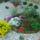 virágjaim