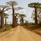 baobab-avenue