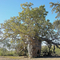 baobab-prison