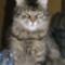 gizus cica