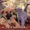 kutya-macska szeretet