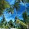 pálmafák,tenger
