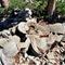 prometheus-tree-stump