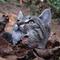 rejtőzködő cica